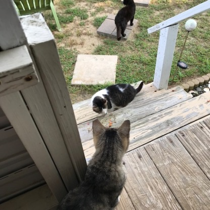 Cat Colony of Chincoteague